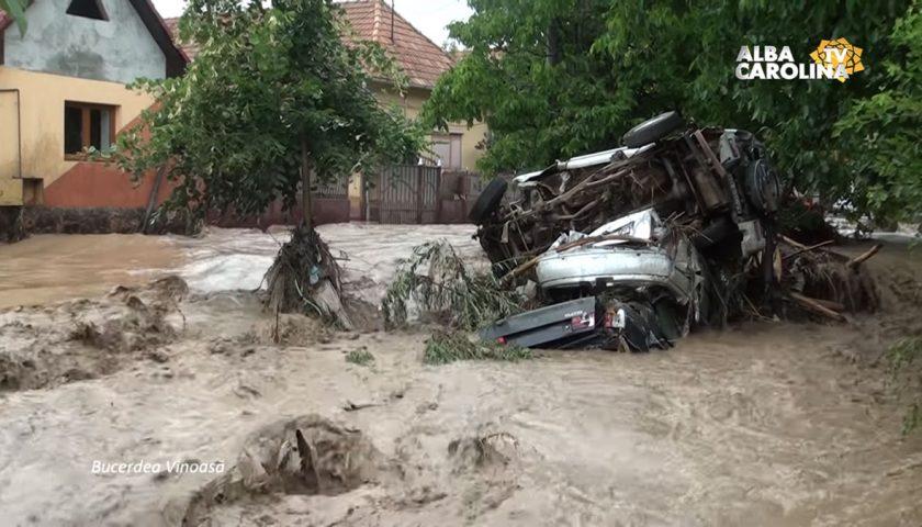 bucerdea-vinoasa-inundatii