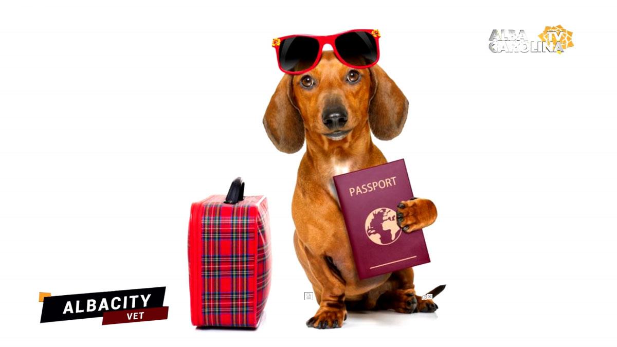 pasaport-caine-albacityvet