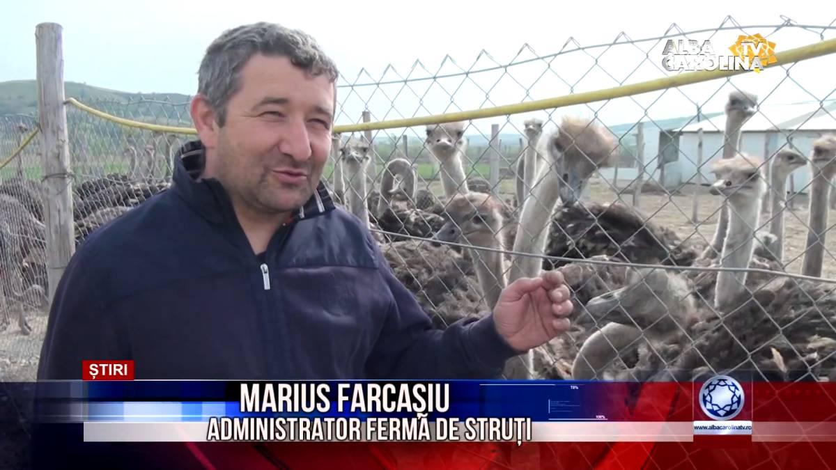 Marius Farcasiu - ferma strut