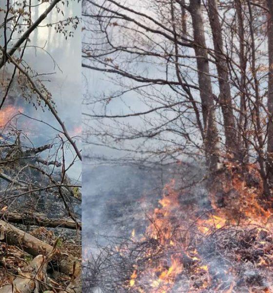 incendiu paduri apuseni